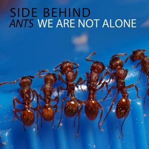 Ants / We Are Not Alone