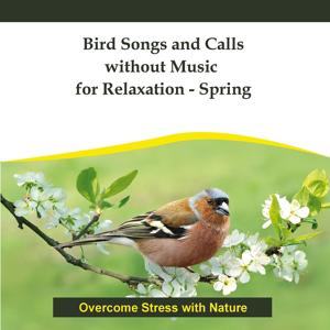 Bird Songs and Calls without Music for Relaxation - Spring