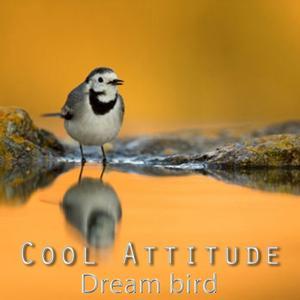 Cool Attitude: Dream Bird
