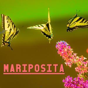 Mariposita